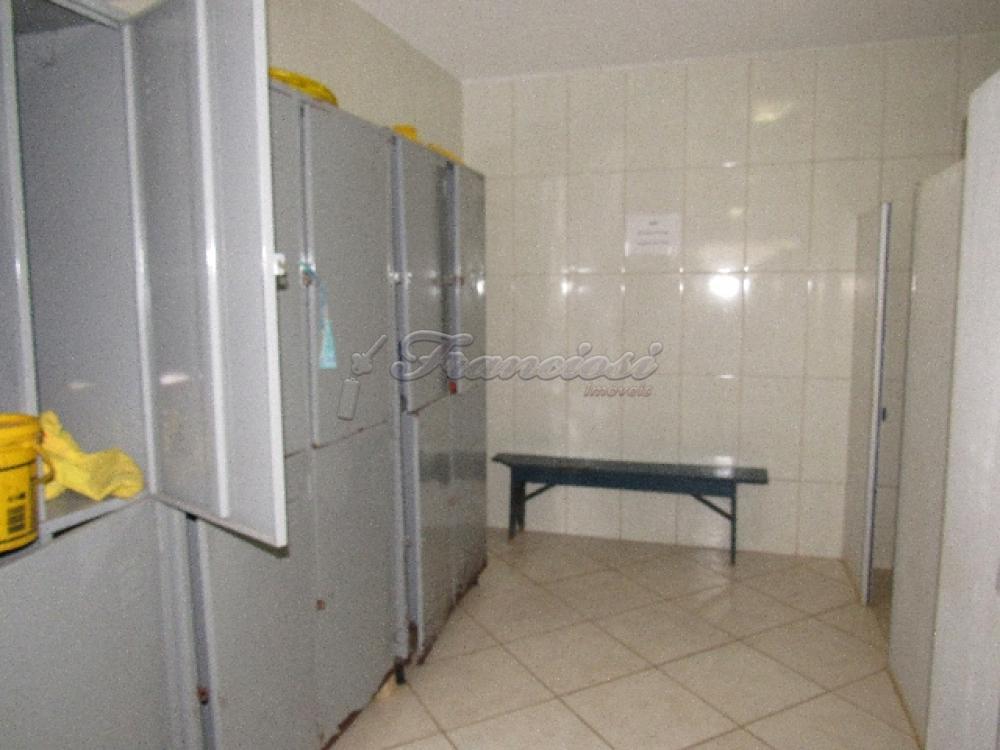 Comprar Comercial / Barracão em Itapetininga - Foto 20