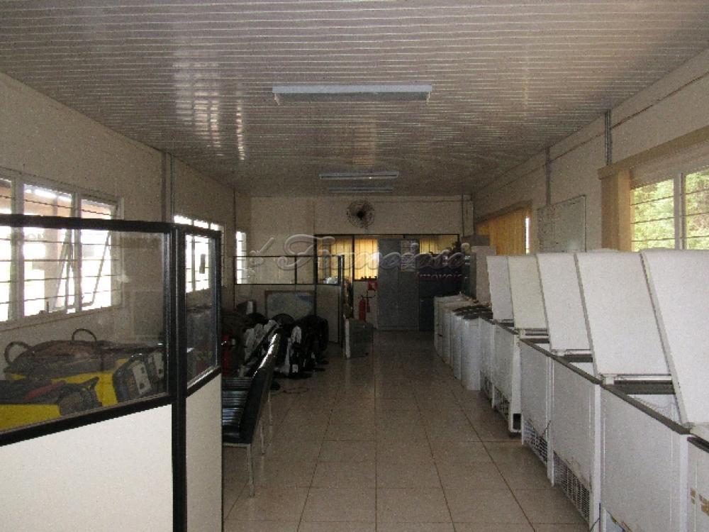 Comprar Comercial / Barracão em Itapetininga - Foto 31