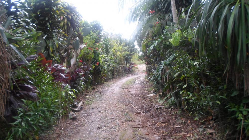 Alugar Rural / Rancho em Itapetininga apenas R$ 800,00 - Foto 13