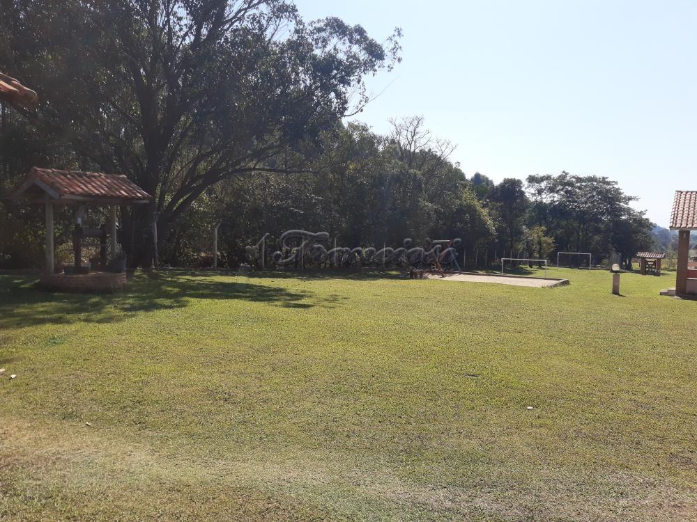 Comprar Rural / Sitio em Sarapuí apenas R$ 430.000,00 - Foto 4