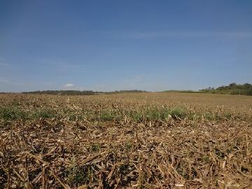 Itapetininga Bairro Pinhalzinho Rural Venda R$12.800.000,00 Area construida 0.01m2