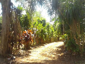 Alugar Rural / Rancho em Itapetininga apenas R$ 800,00 - Foto 19