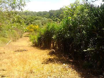 Alugar Rural / Rancho em Itapetininga apenas R$ 800,00 - Foto 20